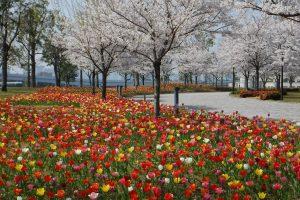 臨海副都心チューリップフェスティバル2019<シンボルプロムナード公園セントラル広場>